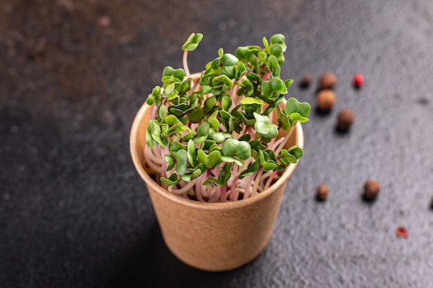 Microgreen fresh radish green petals seedlings raw food fresh ready to eat meal snack on the table