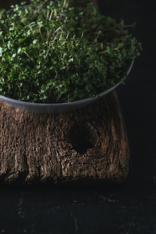 Microgreen in a gray dish on a wooden rustic