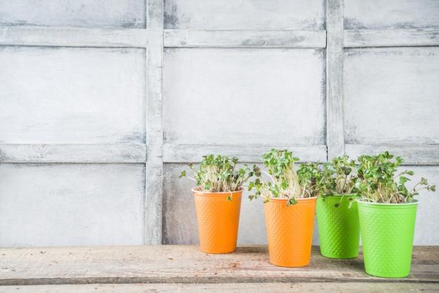 Microgreen в маленьких бумажных стаканчиках
