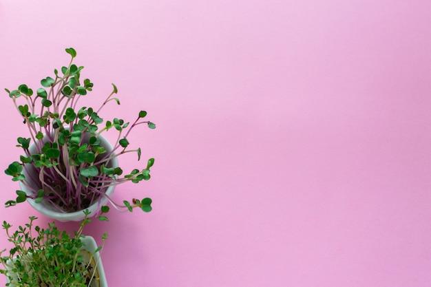 Microgreen kress, pink radish sprouts on pink , flat lay, top view, copyspace
