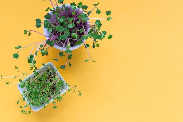 Microgreen kress, pink radish sprouts on yellow , flat lay, top view, copyspace
