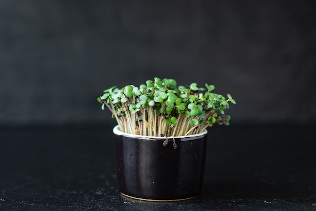 マイクログリーンマスタードグリーンまたはバジル大根スナックビーガンまたはベジタリアン料理