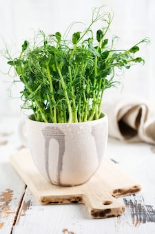 Microgreen pea sprouts on light old wooden table. vintage style. vegan and healthy eating concept. growing sprouts. selective focus