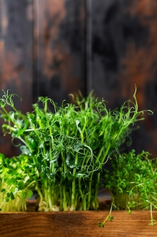 Microgreen pea sprouts on old wooden table. vintage style. vegan and healthy eating concept. growing sprouts. selective focus