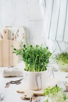 가벼운 오래 된 나무 테이블에 microgreen 완두콩 콩나물. 빈티지 스타일. 채식주의 자 및 건강한 식생활 개념. 성장하는 콩나물.