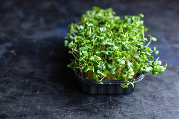 サラダやスナック用のマイクログリーン大根の新鮮なハーブ