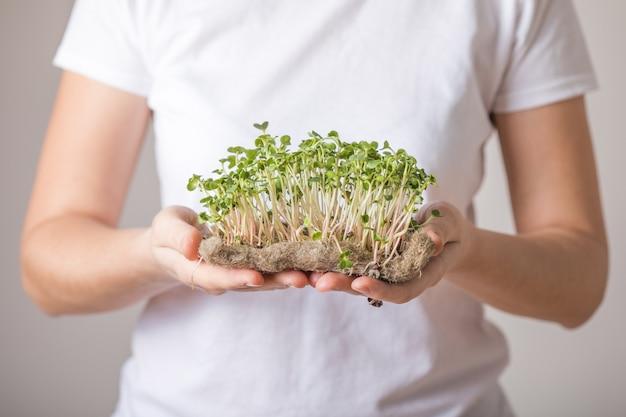 Ростки микрозелени редиса в женских руках.