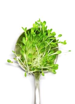 Салат микрозелени на белом фоне изолировать. выборочный фокус. природа.