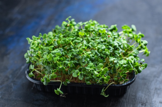 マイクログリーンサラダ生食マスタードハーブバジル大根料理スナック