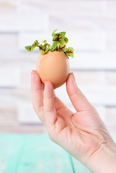 Microgreen sprouts in eggshell. easter decorations. easter egg. stylish rural still life. zero waste concept