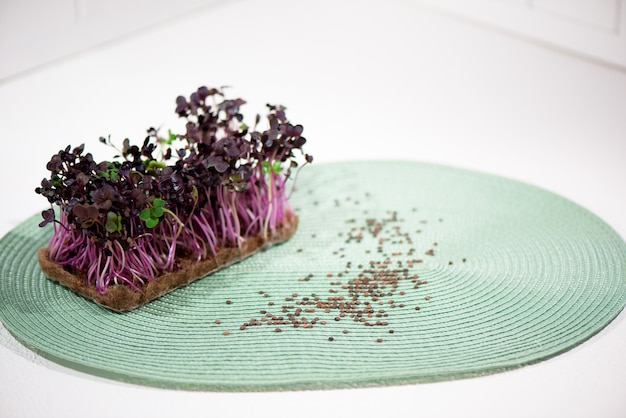 Microgreen sprouts in the hands of a woman.