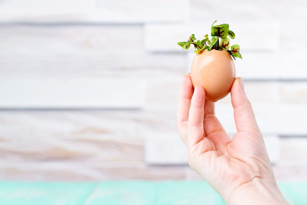 달걀 껍질에 있는 미세 녹색 새싹. 암컷 손은 달걀 껍질에 마이크로그린을 들고 있습니다. 제로 웨이스트 개념.