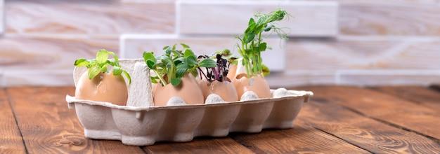 판지 쟁반에 있는 달걀 껍질에 있는 마이크로그린 새싹. 부활절 장식입니다. 부활절 달걀입니다. 세련 된 시골 정입니다. 제로 웨이스트 개념.