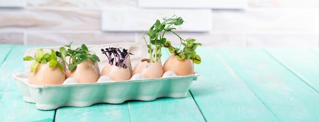 판지 쟁반에 있는 달걀 껍질에 있는 마이크로그린 새싹. 부활절 장식입니다. 부활절 달걀입니다. 세련 된 시골 정입니다. 제로 웨이스트 개념