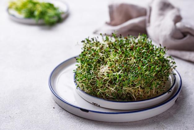 Микро-зеленые ростки люцерны. здоровая пища