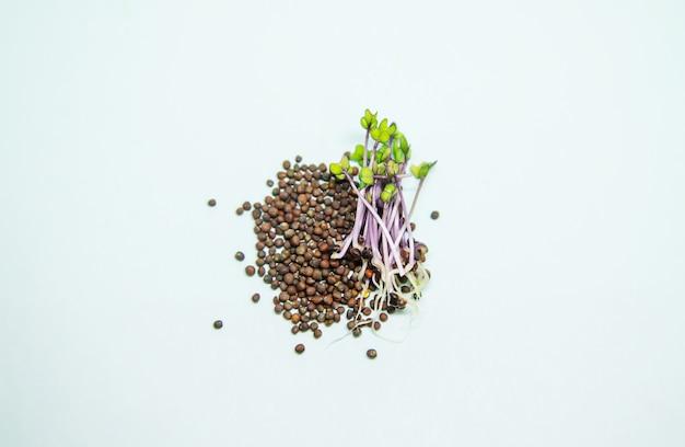 흰색 바탕에 붉은 양배추의 미세 녹색 콩나물. 선택적 초점입니다. 자연.
