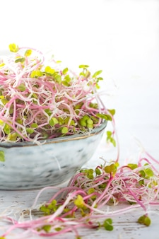 Microgreen. sprouts of radish in gray bowl