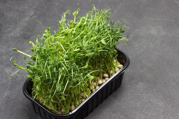 Microgreen 콩나물. 녹색 완두콩의 비건 마이크로 새싹. 자라는 완두콩 씨앗. 평면도. 검정색 배경. 공간 복사