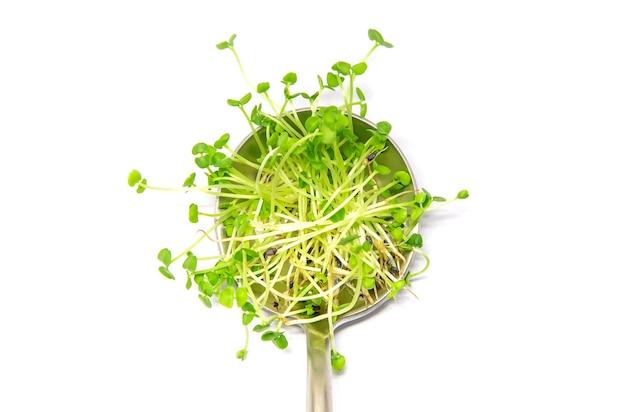 Microgreens 바질 흰색 배경에 격리합니다. 선택적 초점. 음식.