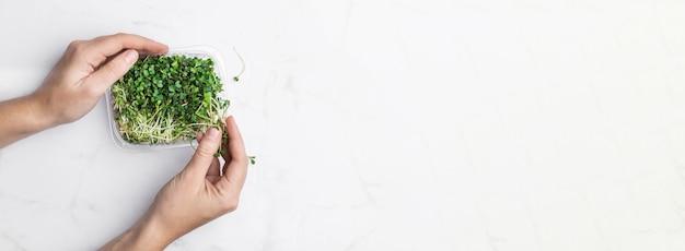 흰색 대리석 벽에 microgreens 그릇입니다. 슈퍼 푸드 개념.