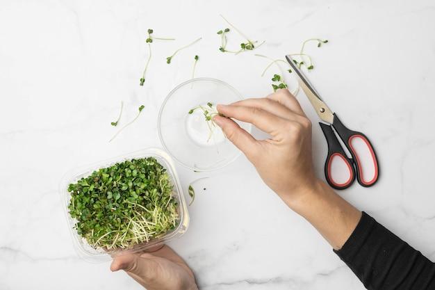 손과 가위로 microgreens 그릇