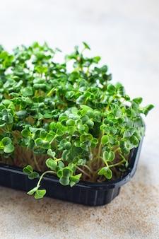 マイクログリーンコンテナ野菜サラダ生食マスタードハーブバジル大根ビーガン