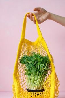 家庭で発芽したサラダ用のポットグリーンシュートのポット発芽エンドウ豆または豆のマイクログリーン