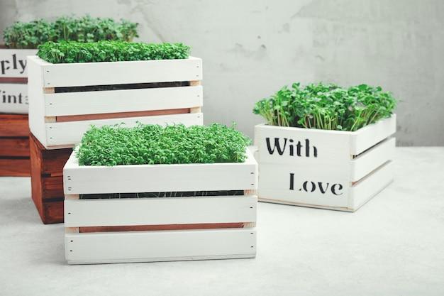 흰색 나무 상자에 담긴 마이크로그린. 가정 정원 가꾸기 및 실내 녹지 성장의 개념