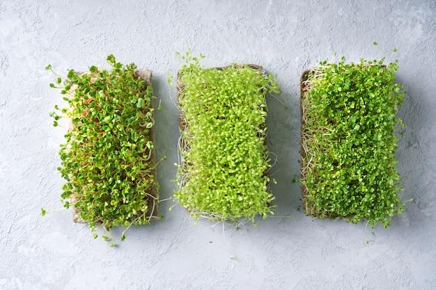Микрозелень на бетонном столе.