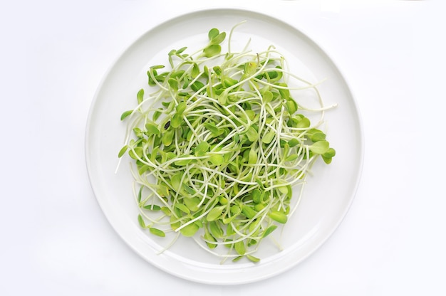 Microgreens seedlings on white circle plate against white background.