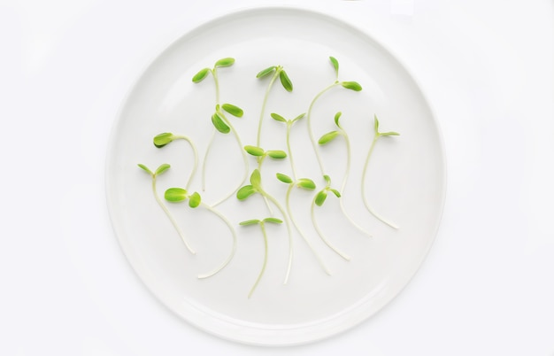 Microgreens seedlings on white plate against white background.