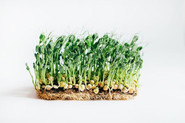 Microgreens 콩나물 흰색 절연