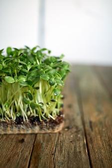 木製の背景にマイクログリーンヒマワリ、ビーガンマイクロヒマワリグリーンシュート、成長する健康的な食事の概念、
