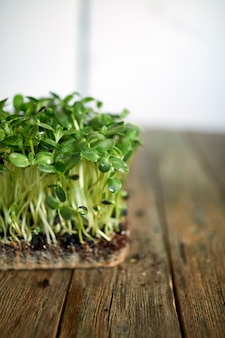 Microgreens sunflower on wooden background, vegan micro sunflower greens shoots, growing healthy eating concept
