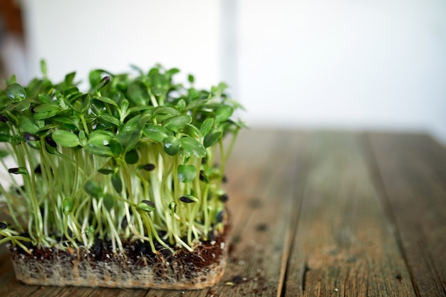 Microgreens sunflower on wooden background, vegan micro sunflower greens shoots, growing healthy eating concept,