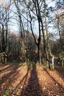낙엽수 낙엽, 신선한 공기가있는 공원의 한가을