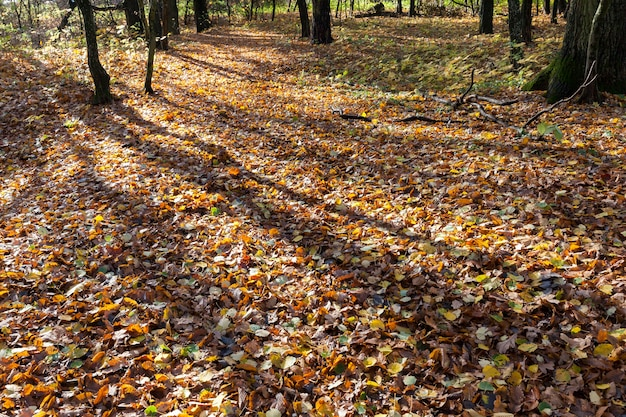 Mid autumn in a park with fallen leaves from deciduous trees, fresh air