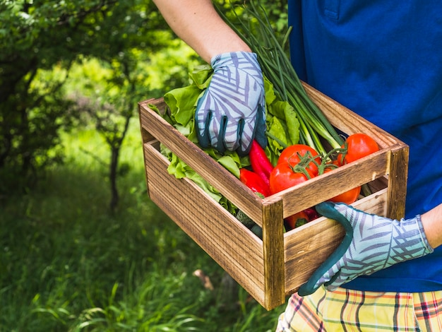Mid-section of man holding fresh vegetables in crate