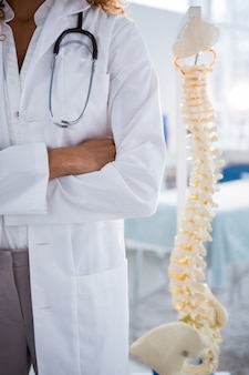 Mid section of physiotherapist standing beside spine model