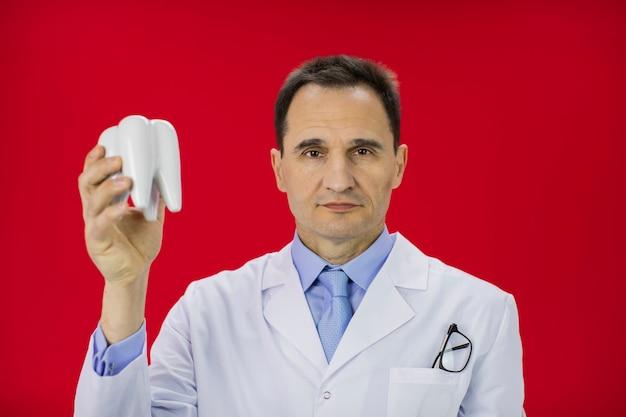 가슴 주머니에 흰색 중간 코트 안경의 중간 나이 의사가 치아 모델을 개최