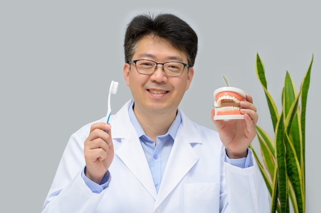 A middle-aged asian dentist holding dental models and toothbrushes in his hand.