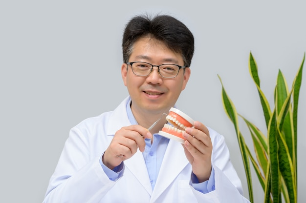 A middle-aged asian dentist holding tooth model and dentistry equipment tools in hand.
