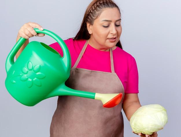 白い背景の上に立っているじょうろを使用してキャベツに水をまくエプロンの中年庭師の女性