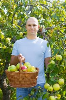 Uomo di mezza età con raccolto di mele