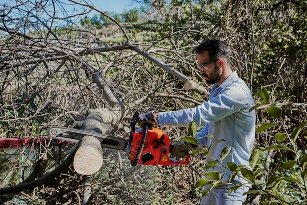 Мужчина средних лет с бензопилой срубает фиговое дерево
