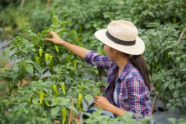 Middle aged woman farmer, with organic chili on hand