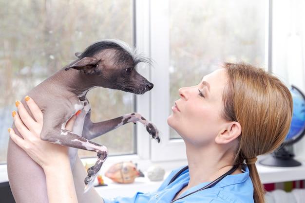 中年の女性獣医が犬を診察します。医院。 。医院。