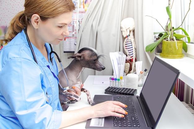 中年の女性獣医が犬を診察します。診療所、ラップトップ、医療機器。