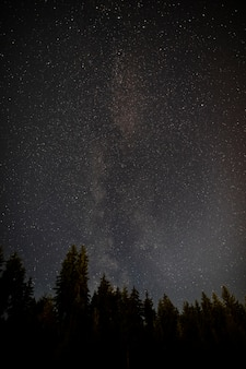 Midnight starry night with forest of evergreen trees