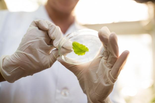 Животик ученого держит лист с помощью пинцета